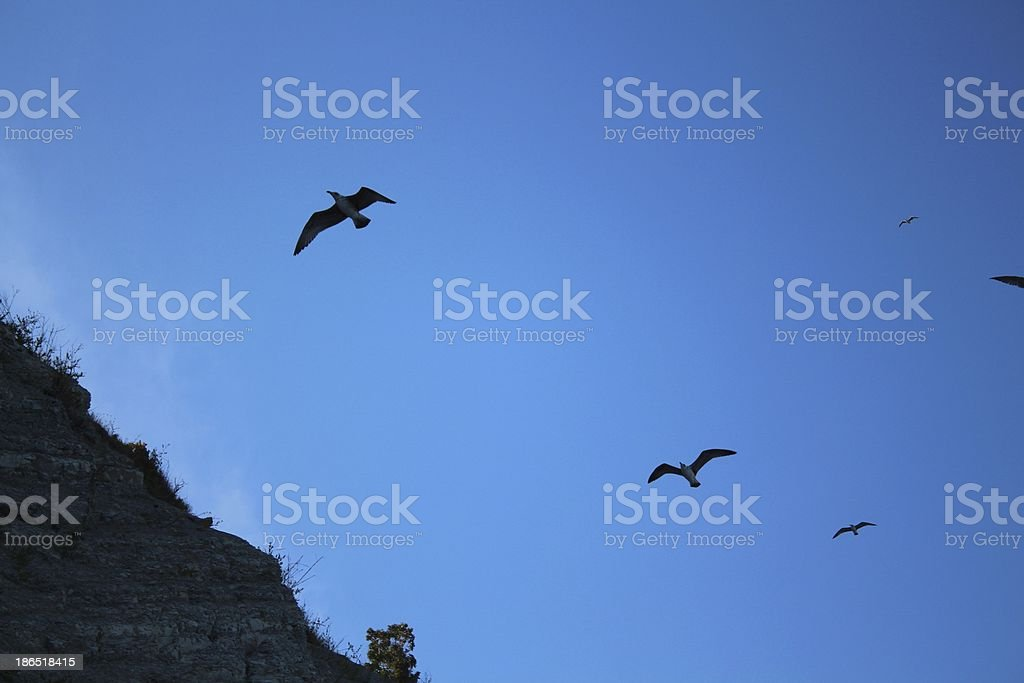 Birds are hovering in the sky royalty-free stock photo