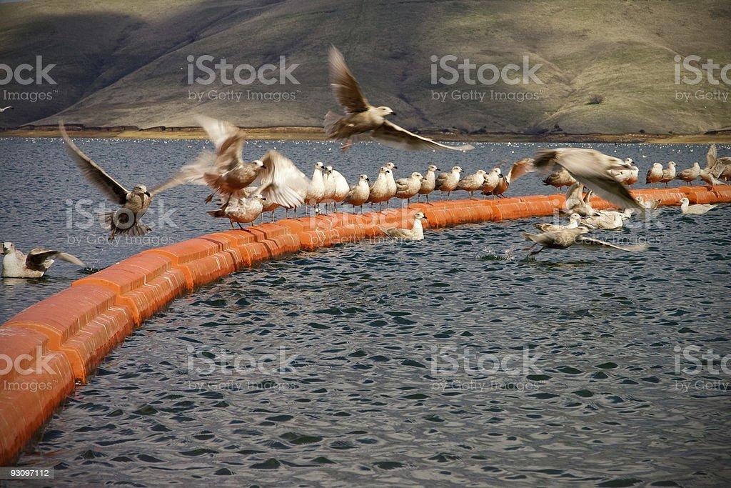Birds at a Lake royalty-free stock photo