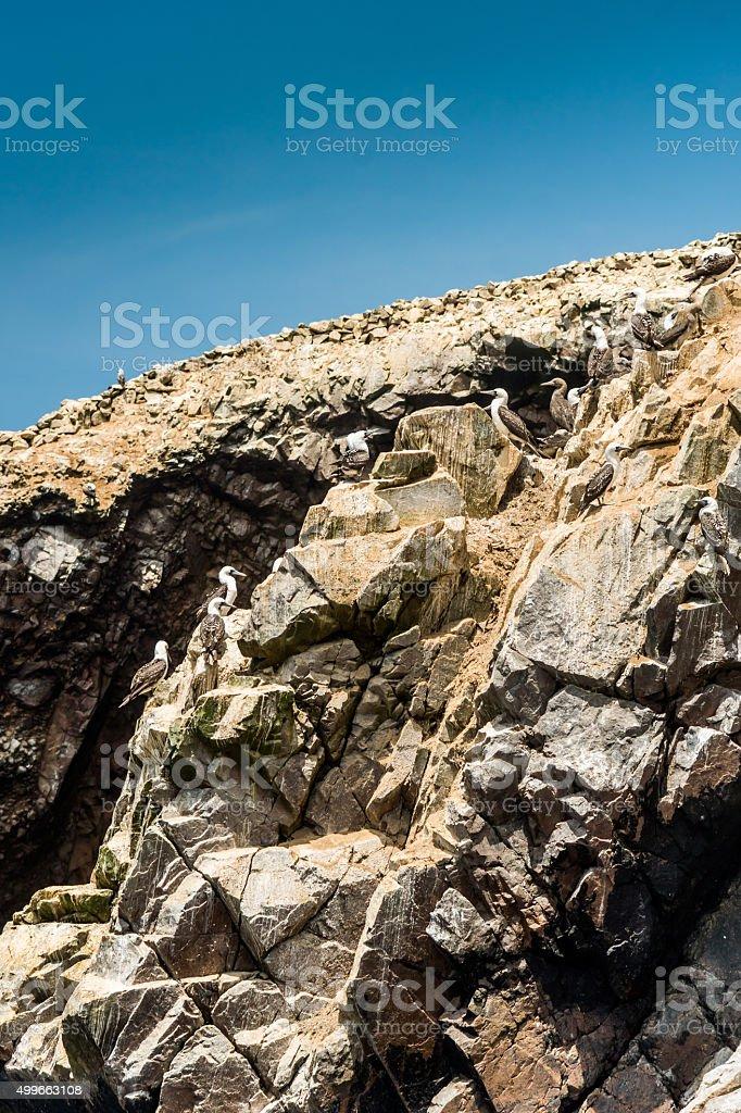 Birds at rocks at Isla Ballestas stock photo