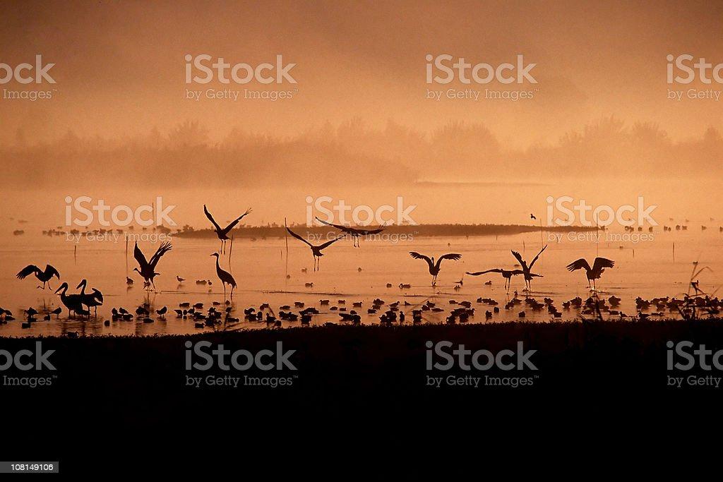 Birds at sunrise royalty-free stock photo