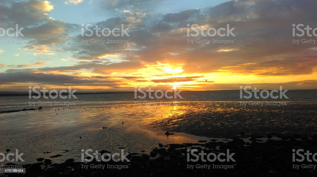 Birds at sunset on Burghead beach stock photo