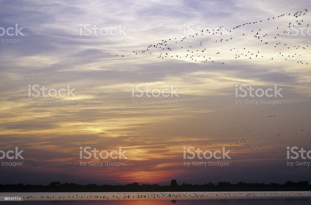Birds at Sunset royalty-free stock photo