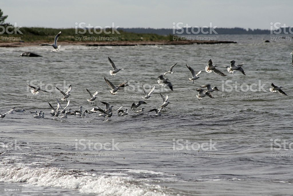 birds at the beach royalty-free stock photo