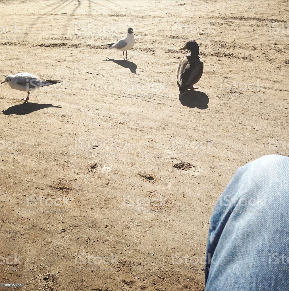 Birds being utterly bored royalty-free stock photo