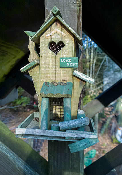 vögel box - fliegengittertüre stock-fotos und bilder