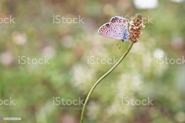 Birds butterfly nature picture id1053393830?b=1&k=6&m=1053393830&s=612x612&h= sjtkmlc3h4rydmr1ke ghekwmu j5nypr5gaxb hui=