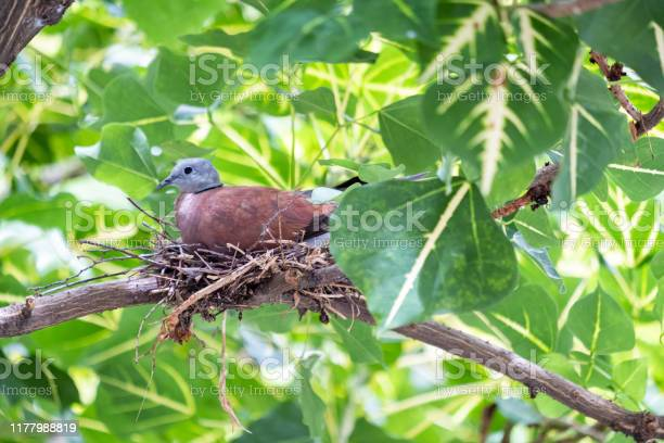 Photo of Birds by the stream and on the tree