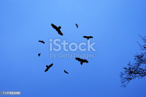 Silhouettes of birds circling in the sky