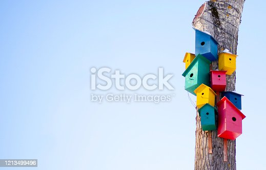 istock Birds colorful rainbow houses on the tree spring: bird commune, three yellow houses for birds, two pink houses for birds, two green houses for birds. Right on the background of the blue sky 1213499496