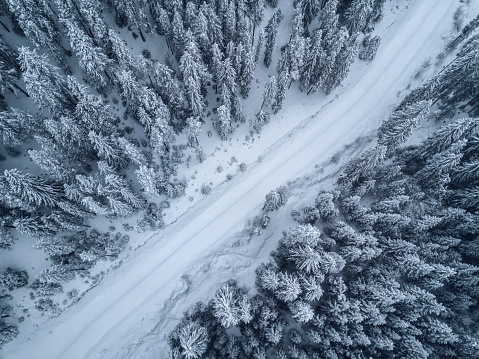 bird's eye, aerial  view of forest covered with snow