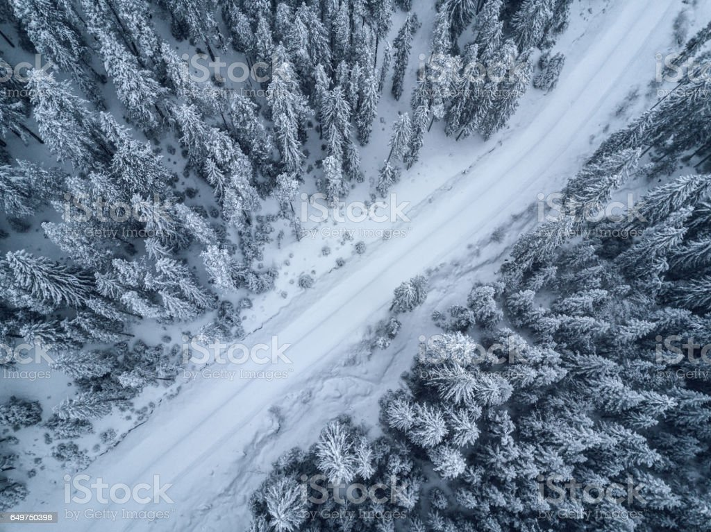 bird's eye, aerial  view of forest covered with snow stock photo