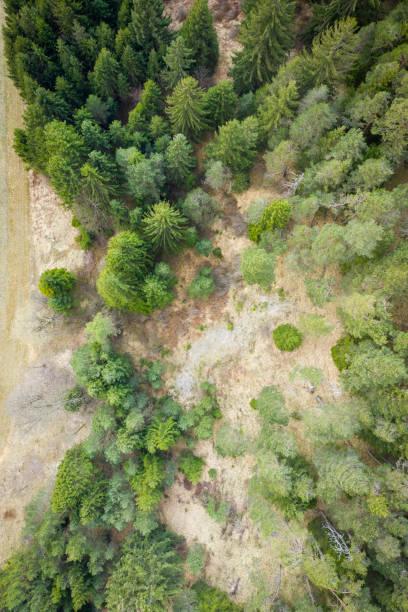 Vögel Blick Luftansicht auf Bäume von Wald und grün braune Wiese – Foto