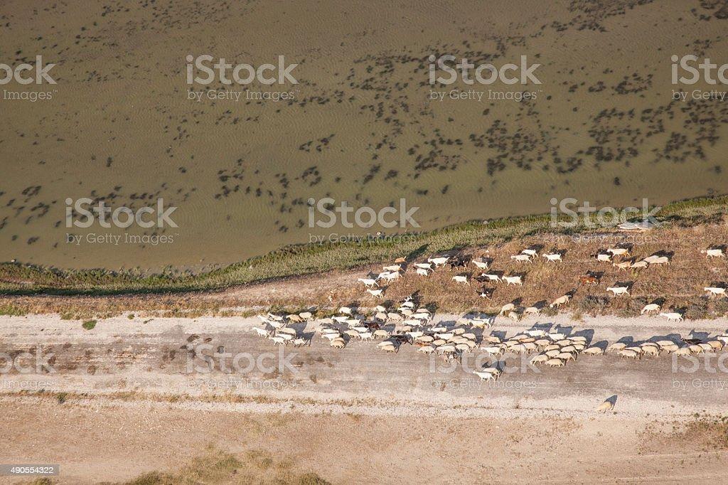 bird's eye view herd of sheep stock photo