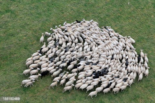 istock Birds eye view of a herd of sheep 155150469