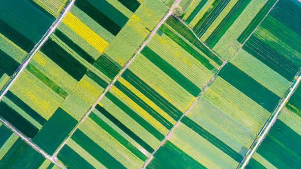 bird's eye view of farmland aerial view of  farmland in spring oilseed rape stock pictures, royalty-free photos & images