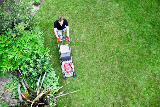 Bird's Eye View of Gardener Mowing Lawn Overhead shot of gardener mowing lawn by shrubbery border. mowing stock pictures, royalty-free photos & images
