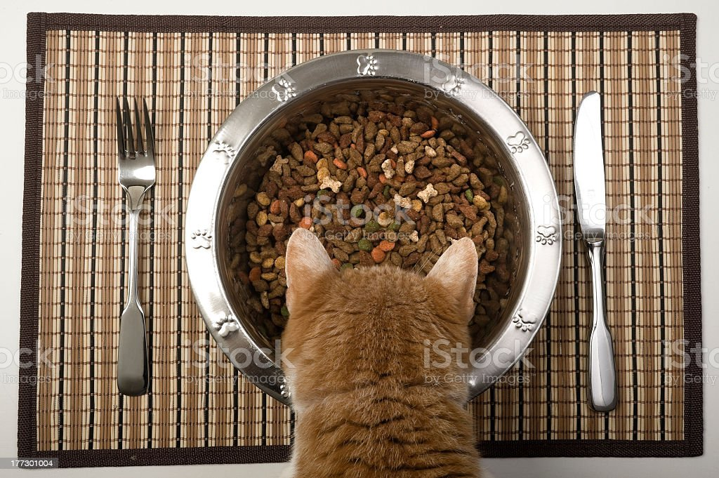 Birds eye view of orange cat eating from silver bowl stock photo