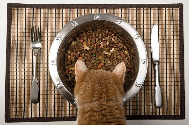 Katze isst – Foto