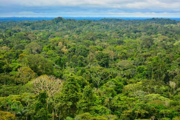 Birds Eye view of the Amazon Region, Ecuador stock photo