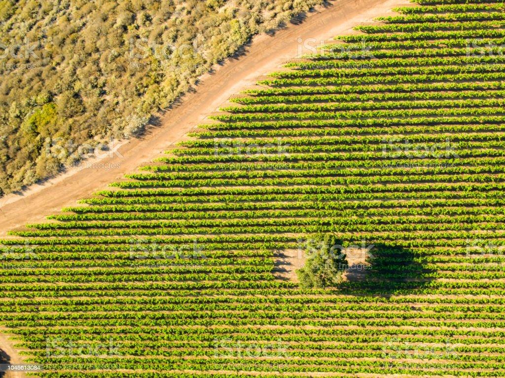 Birds Eye View of Vineyard stock photo