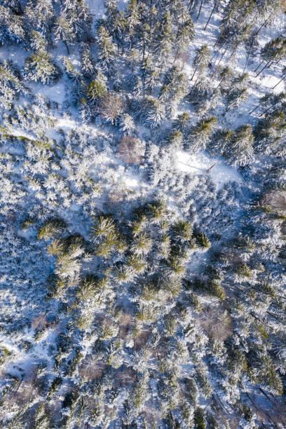Vogelperspektive zum Wald im Winter mit Schnee auf Bäumen in Österreich – Foto