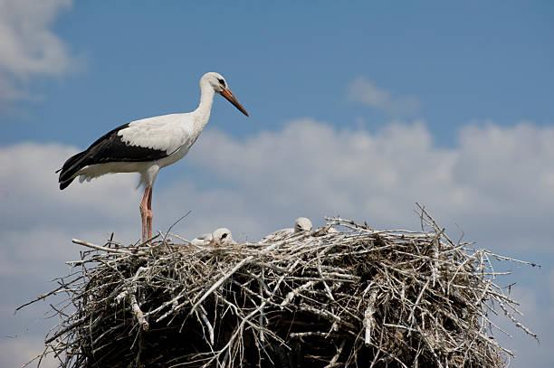 Bird's family – Foto