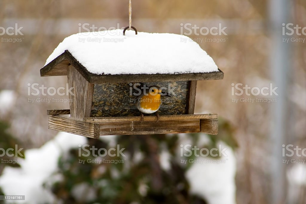 Birds feeder stock photo