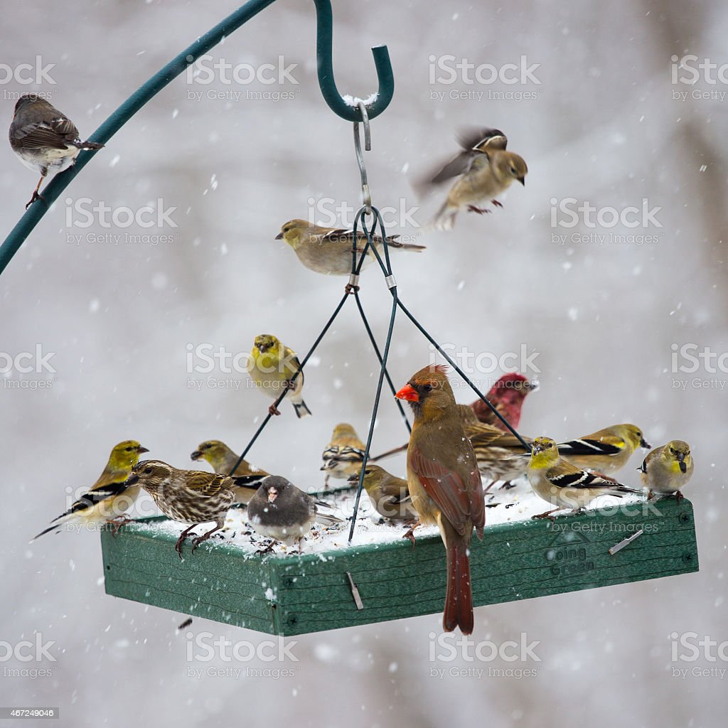 Birds Feeding at a Birdfeeder in a Snow Storm stock photo
