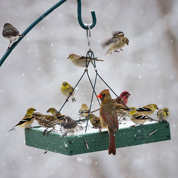 Birds Feeding at a Birdfeeder in a Snow Storm An assortment of birds feeding at a Mid-Atlantic platform bird feeder during a snow storm. chickadee stock pictures, royalty-free photos & images