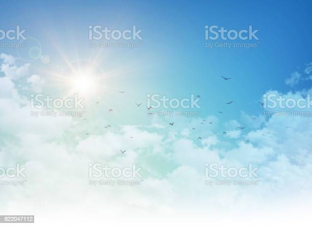Photo of Birds flight in rising sun
