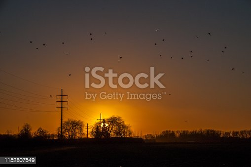 istock Birds flocking around a power line. 1152807549