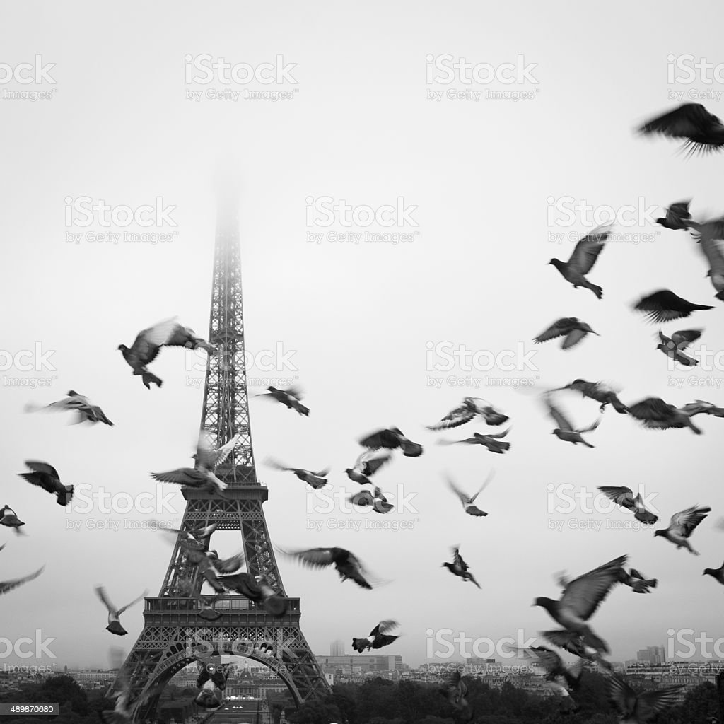Birds fly in front of the Eiffel Tower stock photo