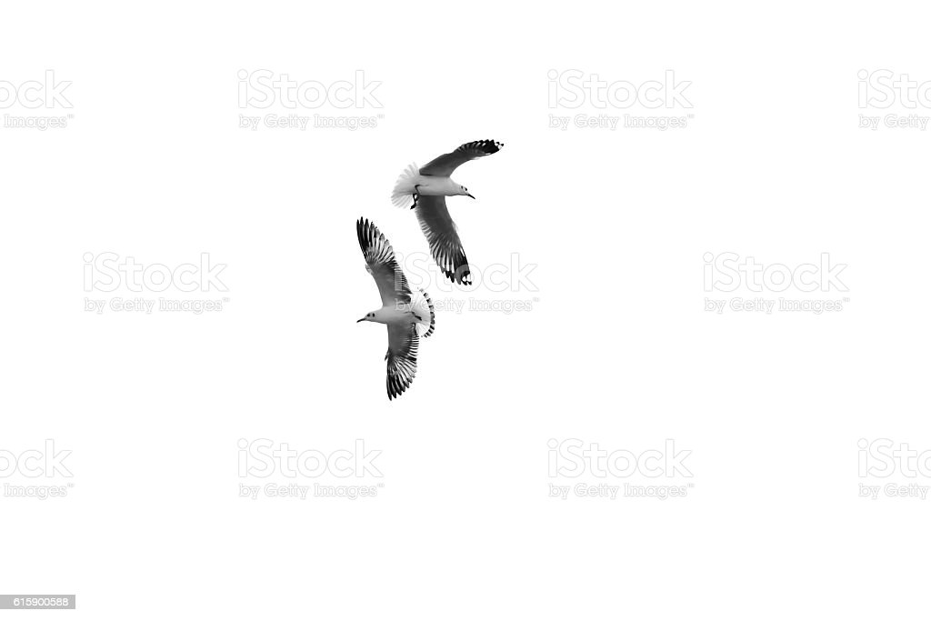 Birds fly in opposite directions (b&w) stock photo