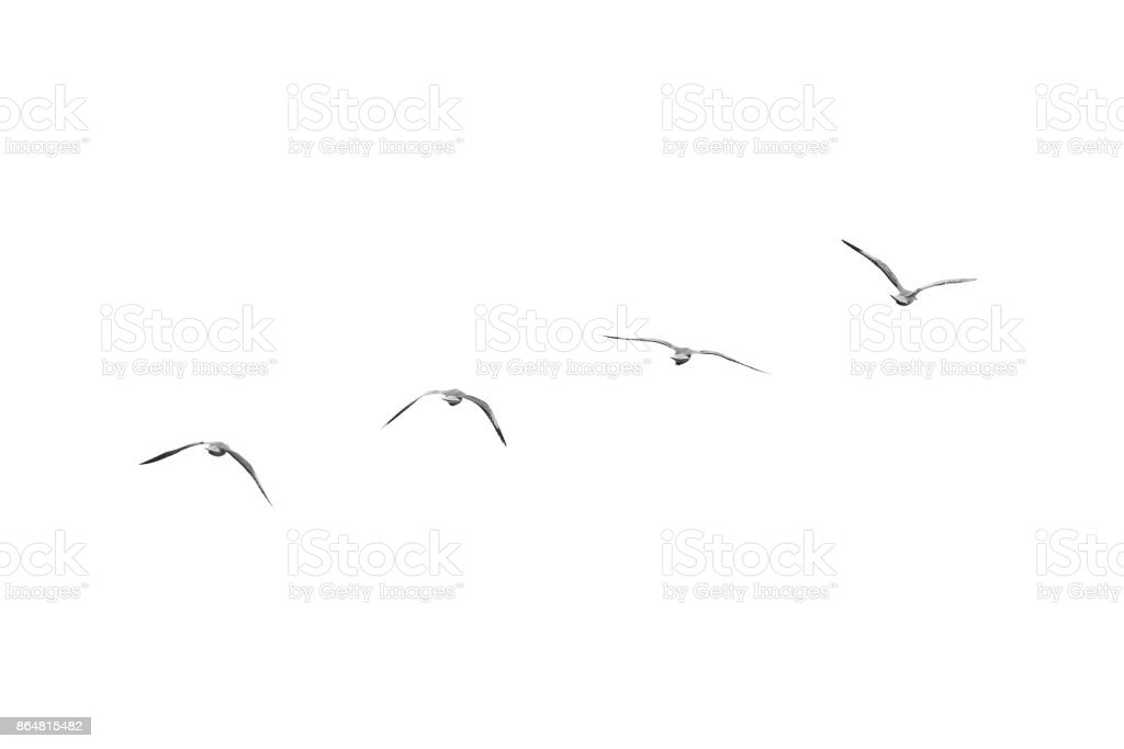 Birds fly on clear sky (b&w) stock photo