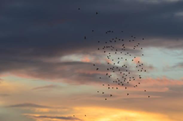 Pássaros voam - foto de acervo