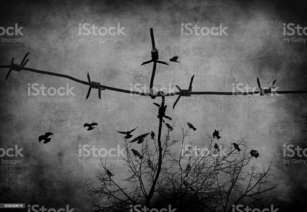 birds fly through the sky barbed wire stock photo