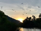 Big birds flying over the sunrise reflecting on the river where it meets the ocean