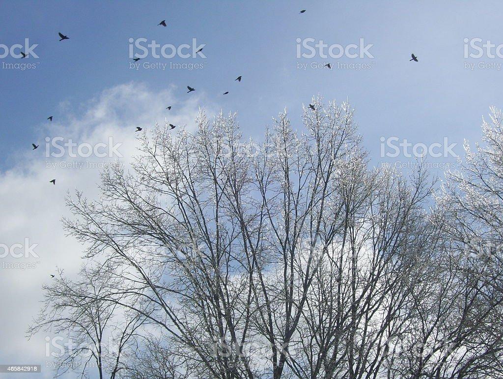 Birds Flying Above Icy Treetops stock photo
