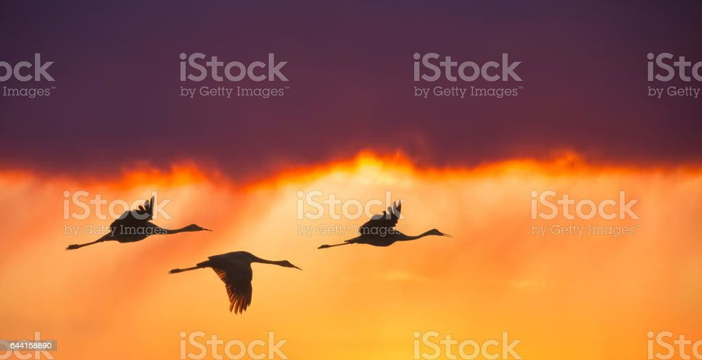 Birds flying against evening sunset panoramic view stock photo