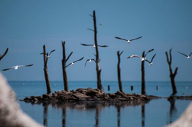 Pájaros volando contra los árboles en el mar - foto de stock