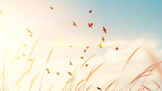 Birds flying and grass flower on sunset sky and cloud abstract background. Freedom and nature concept.