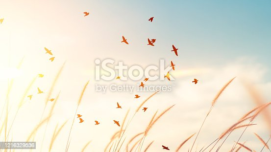 Birds flying and grass flower on sunset sky and cloud abstract background. Freedom and nature concept. Vintage tone filter effect color style.