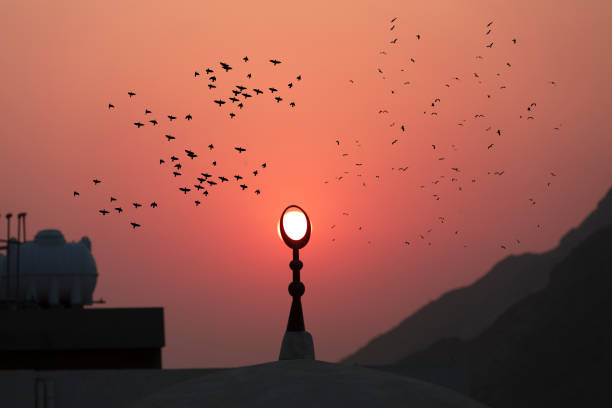 메카에서 미 나 렛 주위를 비행 하는 새 - saudi national day 뉴스 사진 이미지