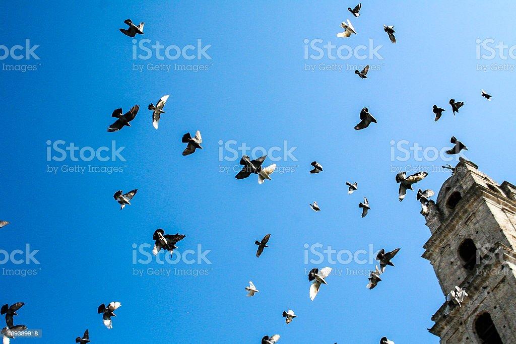 Birds Flying Around Tower stock photo