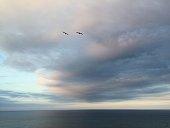 海で飛ぶ鳥
