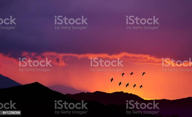 Birds flying at sunrise over the mountains picture id641239098?b=1&k=6&m=641239098&s=612x612&h=joqgngwkre8lxbjlf5s8wel18kof6pyrqjxmn8z4jw8=
