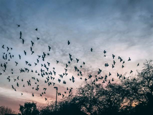 Birds flying at sunset stock photo