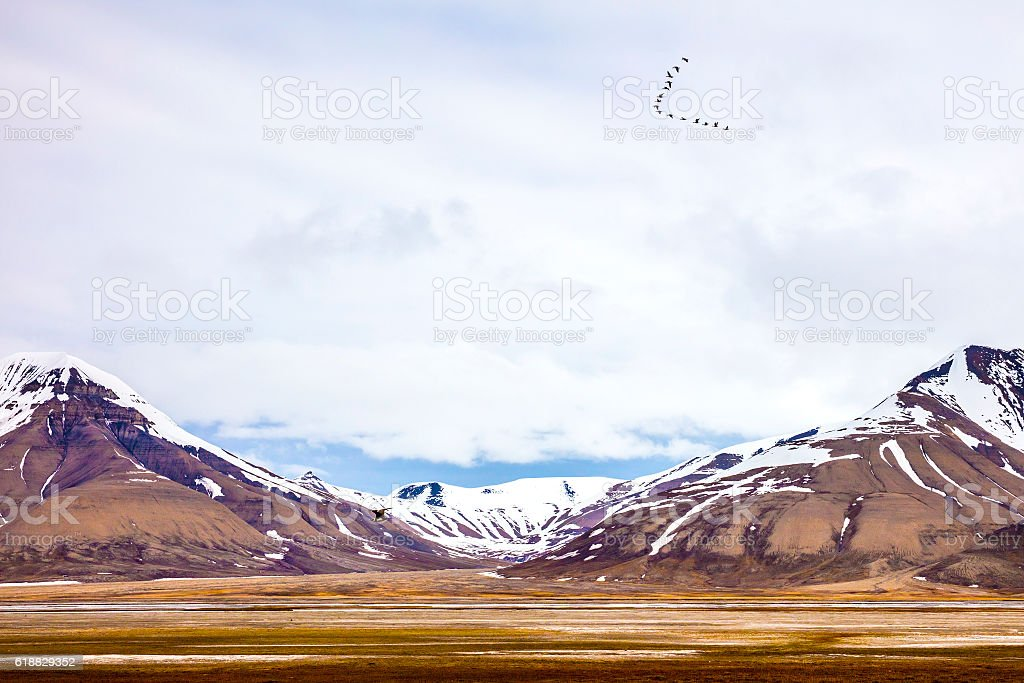 Birds flying between mountains in arctic summer landscape stock photo