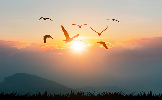 Birds flying freedom on the mountains and sunlight silhouette