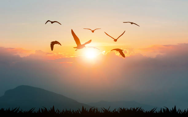 Birds flying freedom on the mountains and sunlight silhouette stock photo